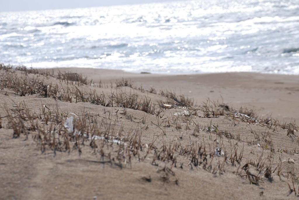 砂浜の枯草-1024x685