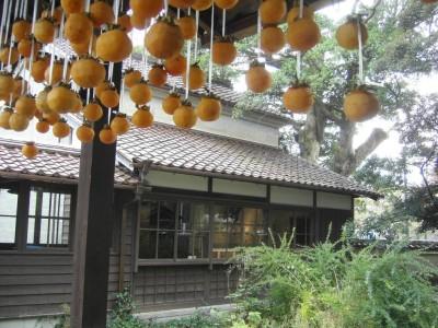 吊るし柿4