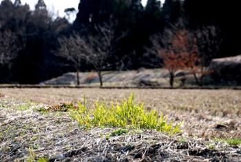 土手の青草