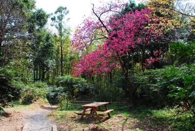 散策路の桜と