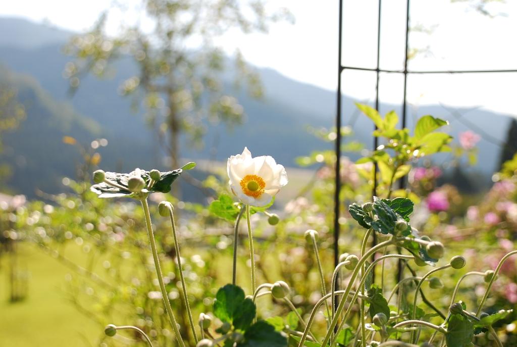 プモリの庭の花