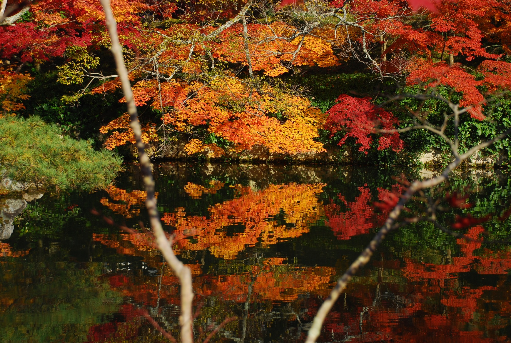 放生池の紅葉