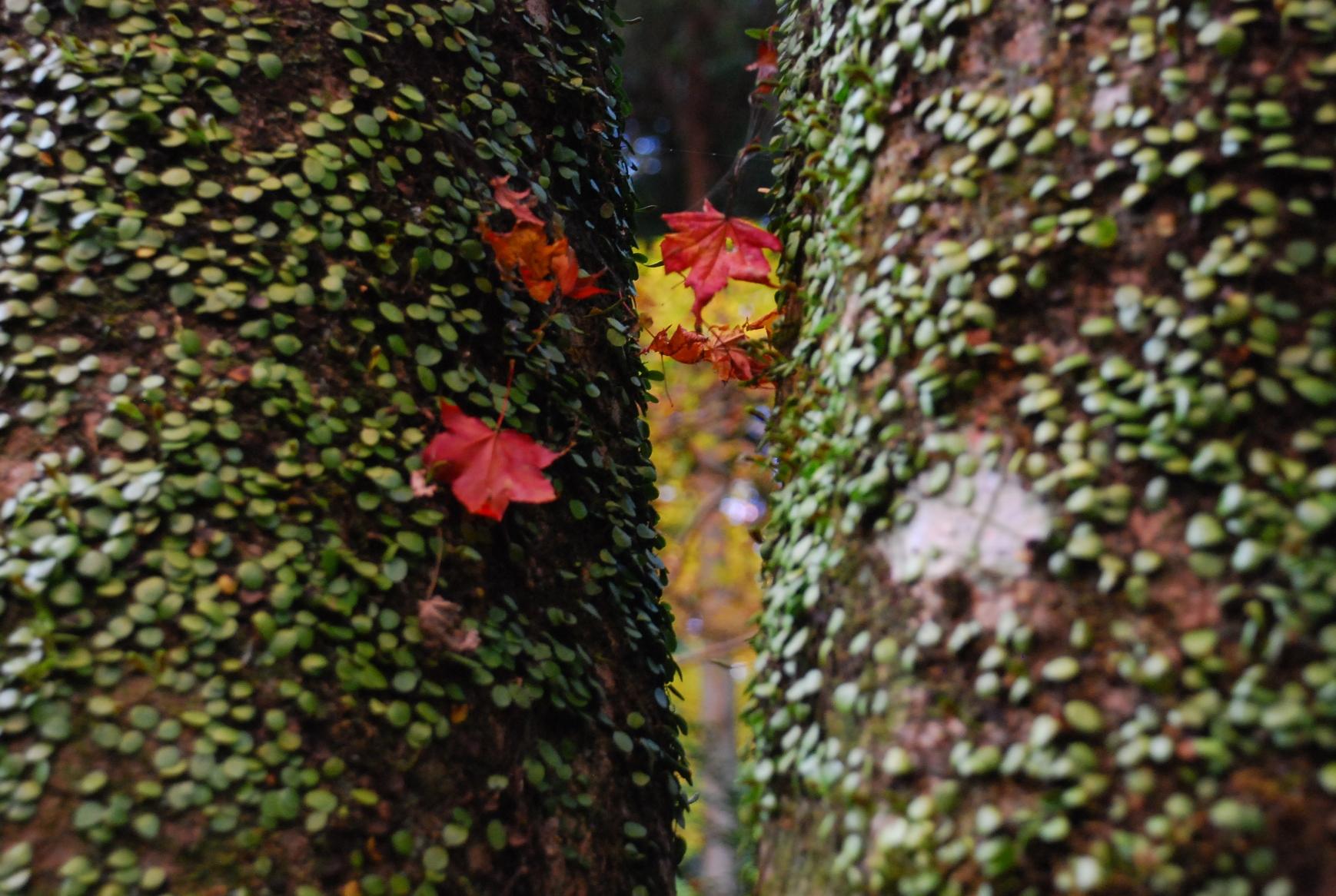樹間の紅葉