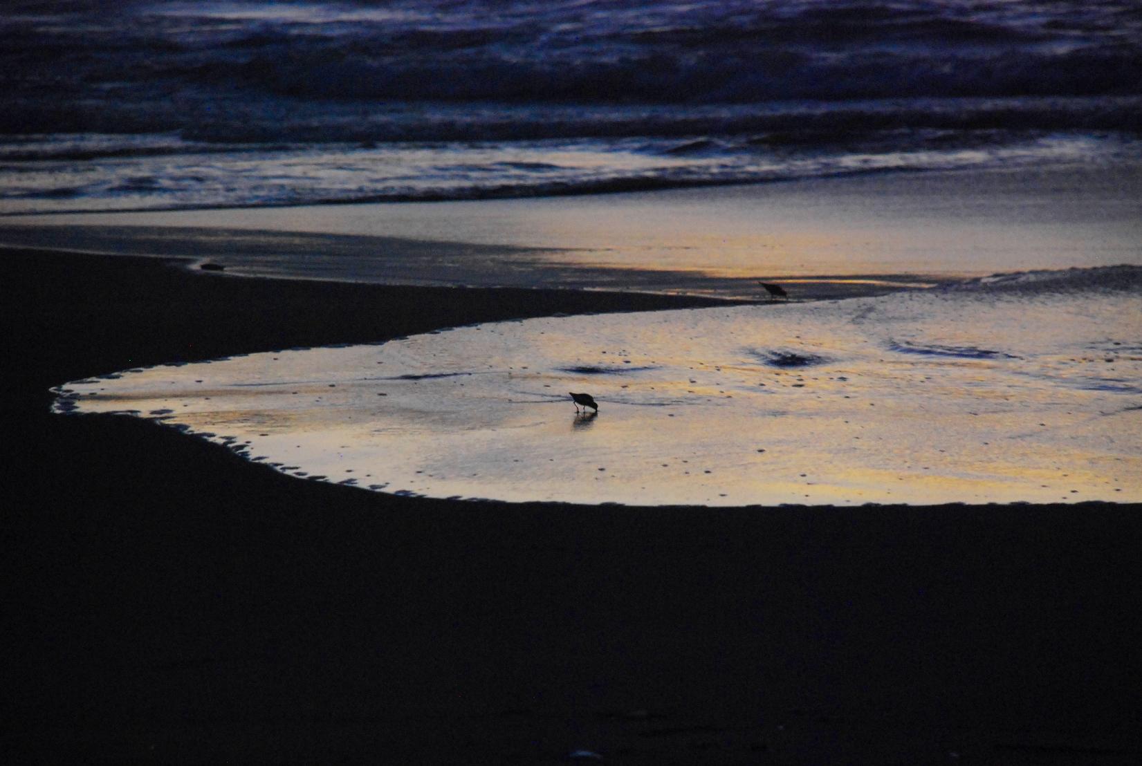白い波の上の小鳥