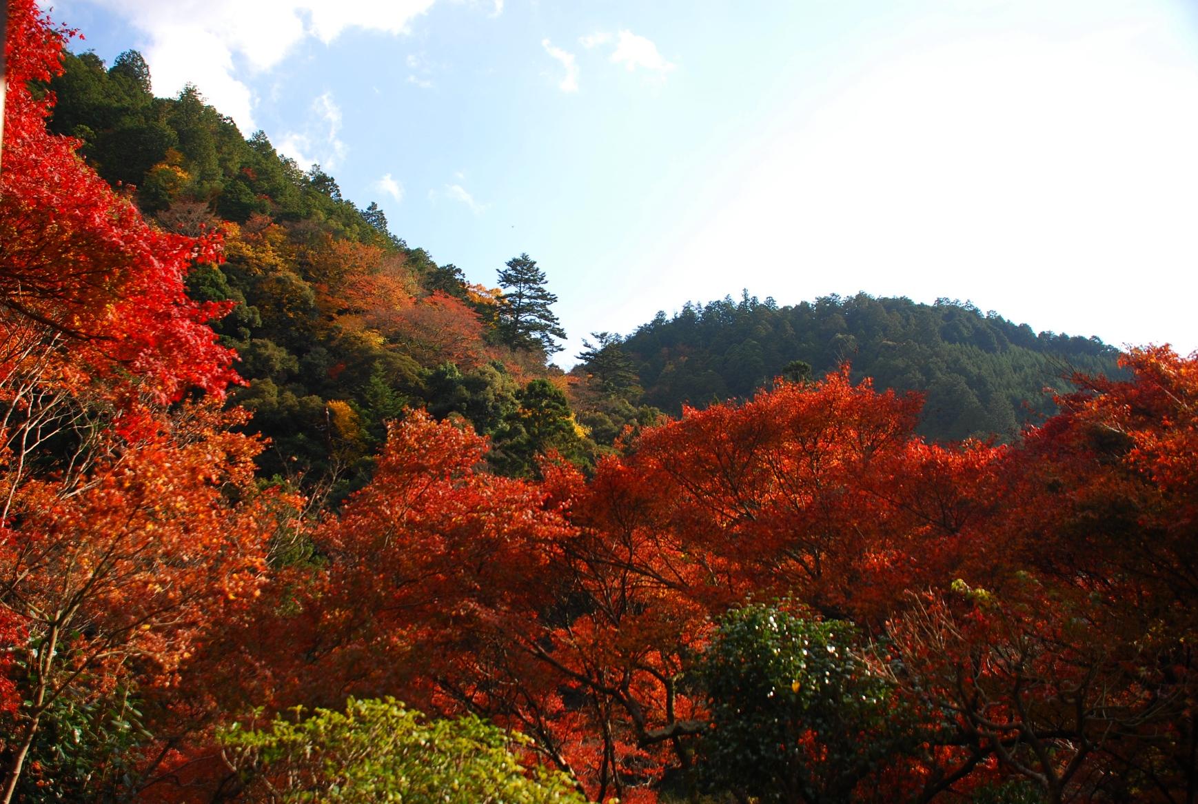 石水院からの紅葉