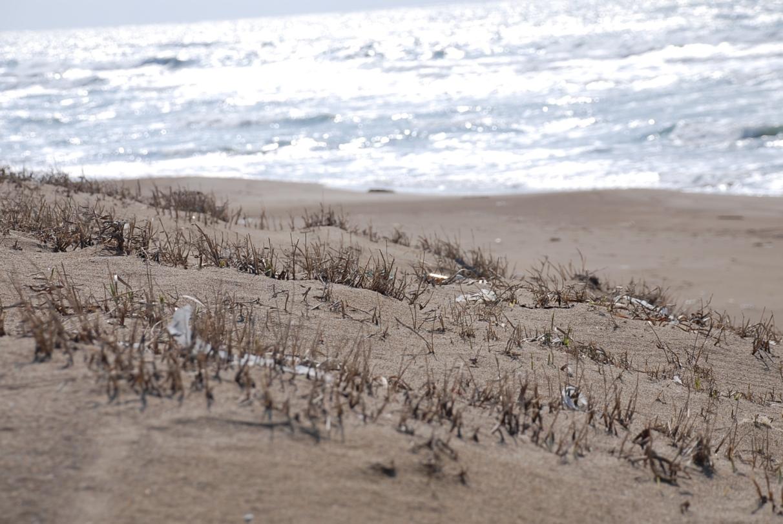 砂浜の枯草