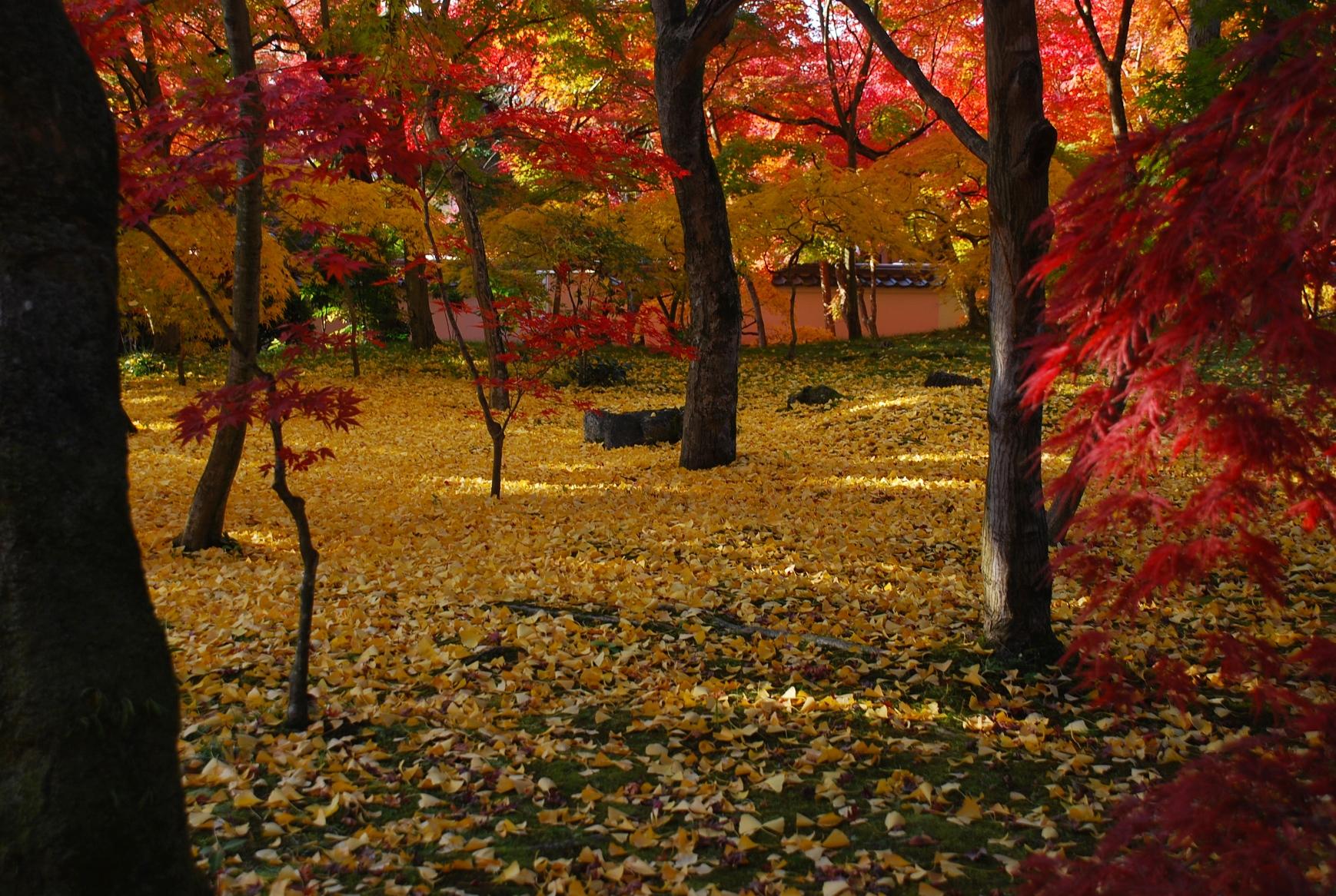 落葉の黄色