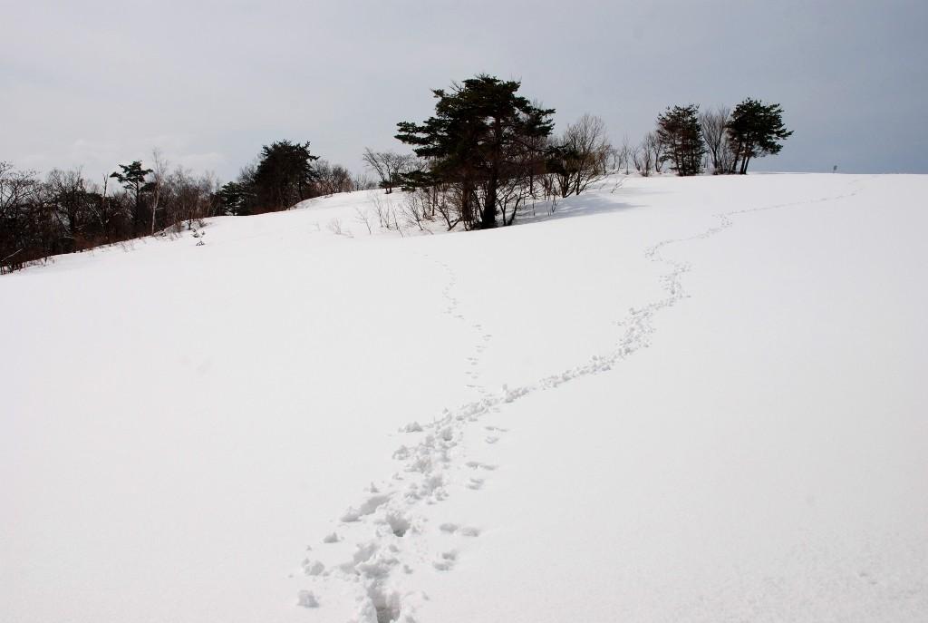 てっぺんの足跡