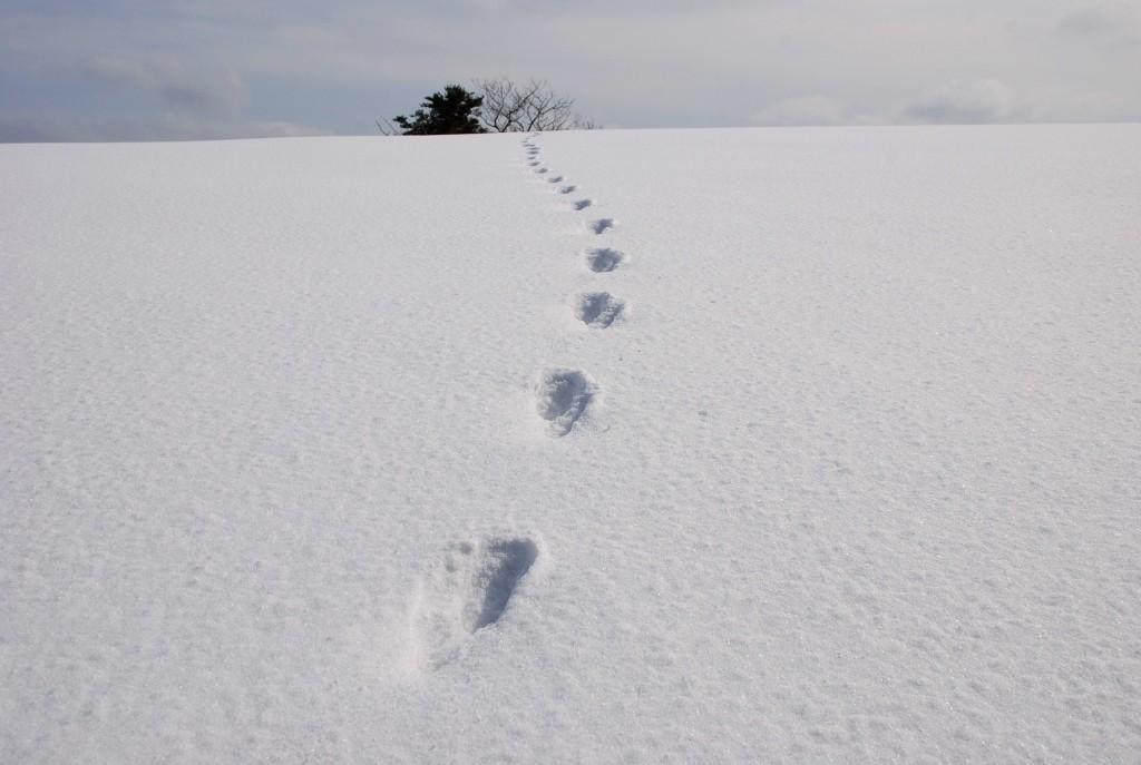 ウサギ足跡縦断