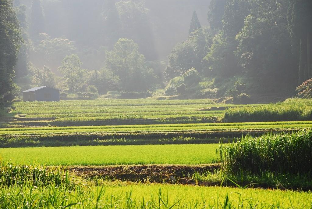 朝靄の田園