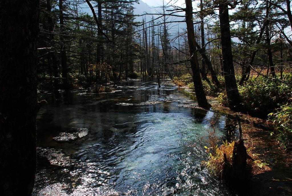 登り口の池1