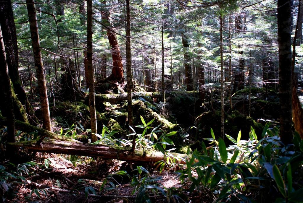 登り口の苔