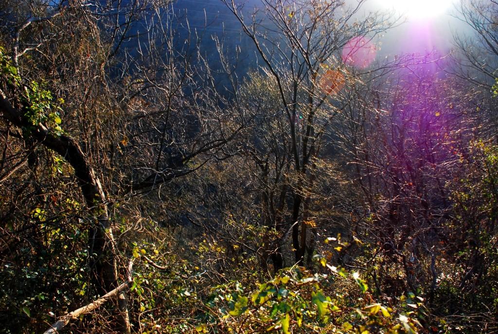木洩れ日1